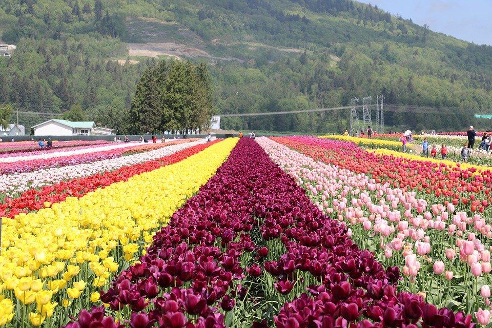 flower-3425446_960_720.jpg
