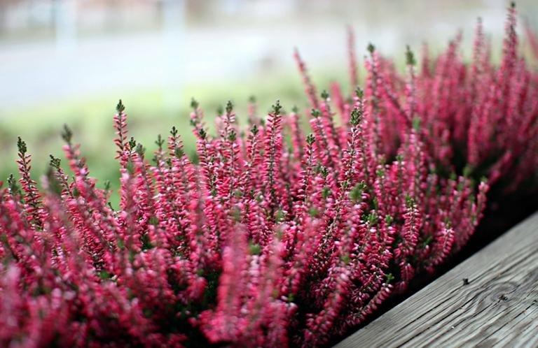 jesienne-dekoracje-balkonu-jakie-rosliny-ozdobia-nasz-balkon-jesienia_653066.jpg